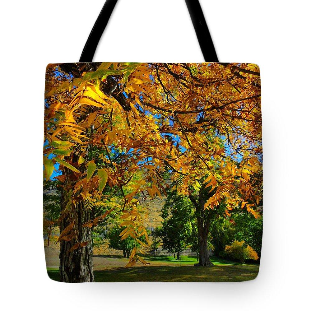 Fall Black Walnut Tree Tote Bag
