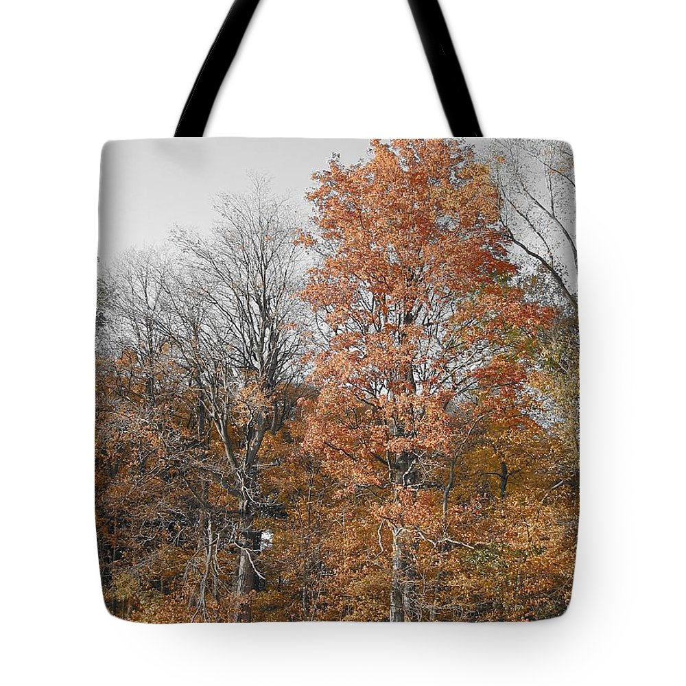 Landscape Tote Bag featuring the photograph Fall Colors by Dylan Punke