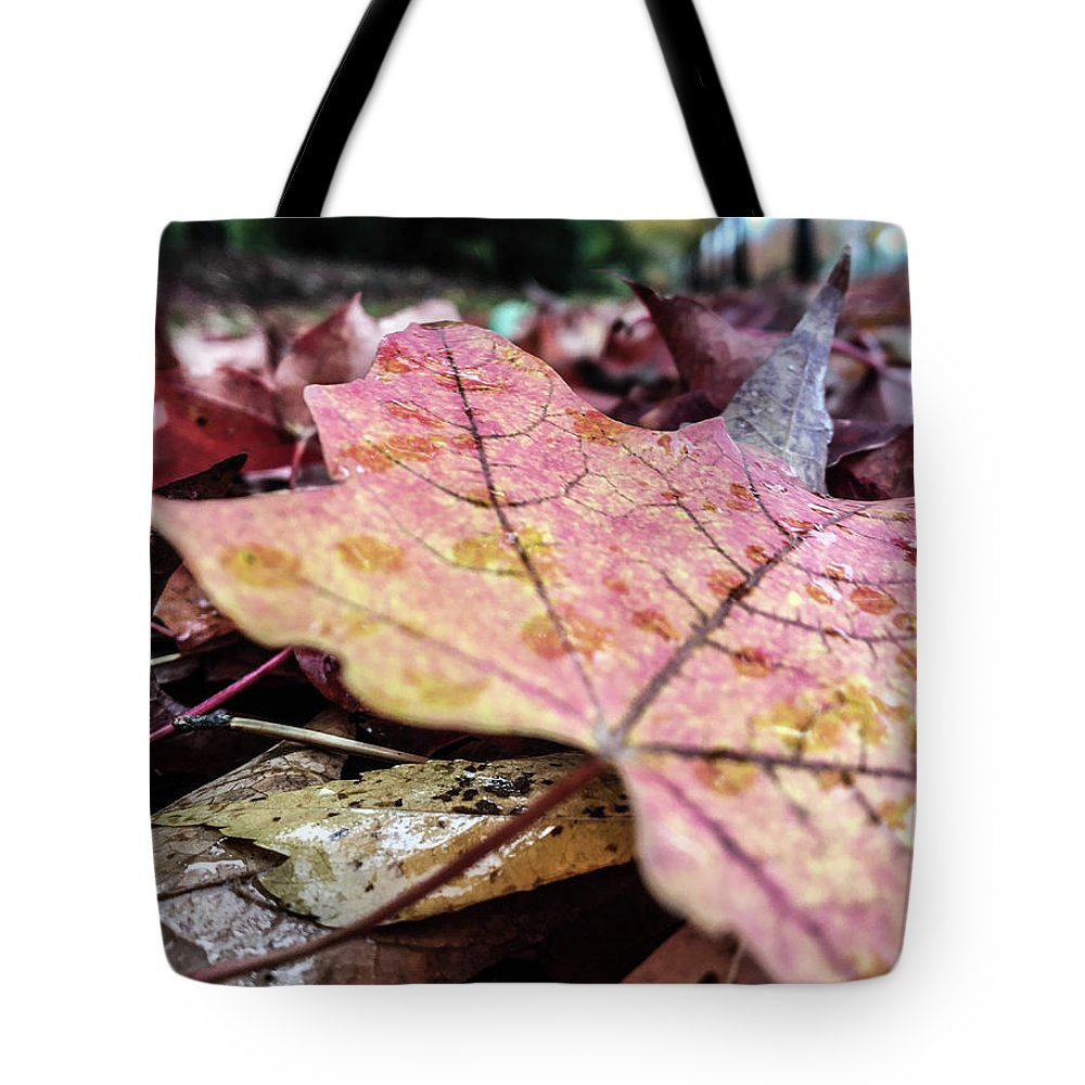 Leaves Tote Bag featuring the photograph Fall Colors by Images By Paige