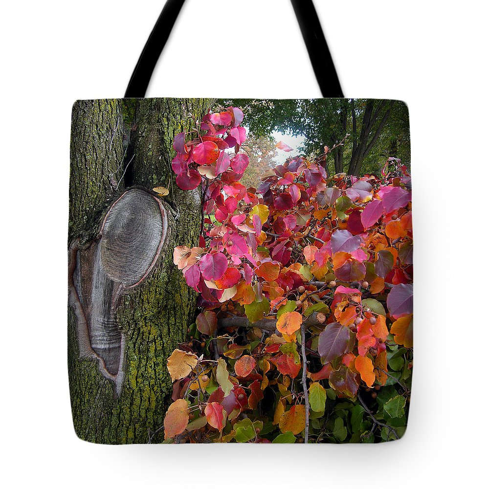 Fall Trees Tote Bag featuring the photograph Fall Composition by John Lautermilch