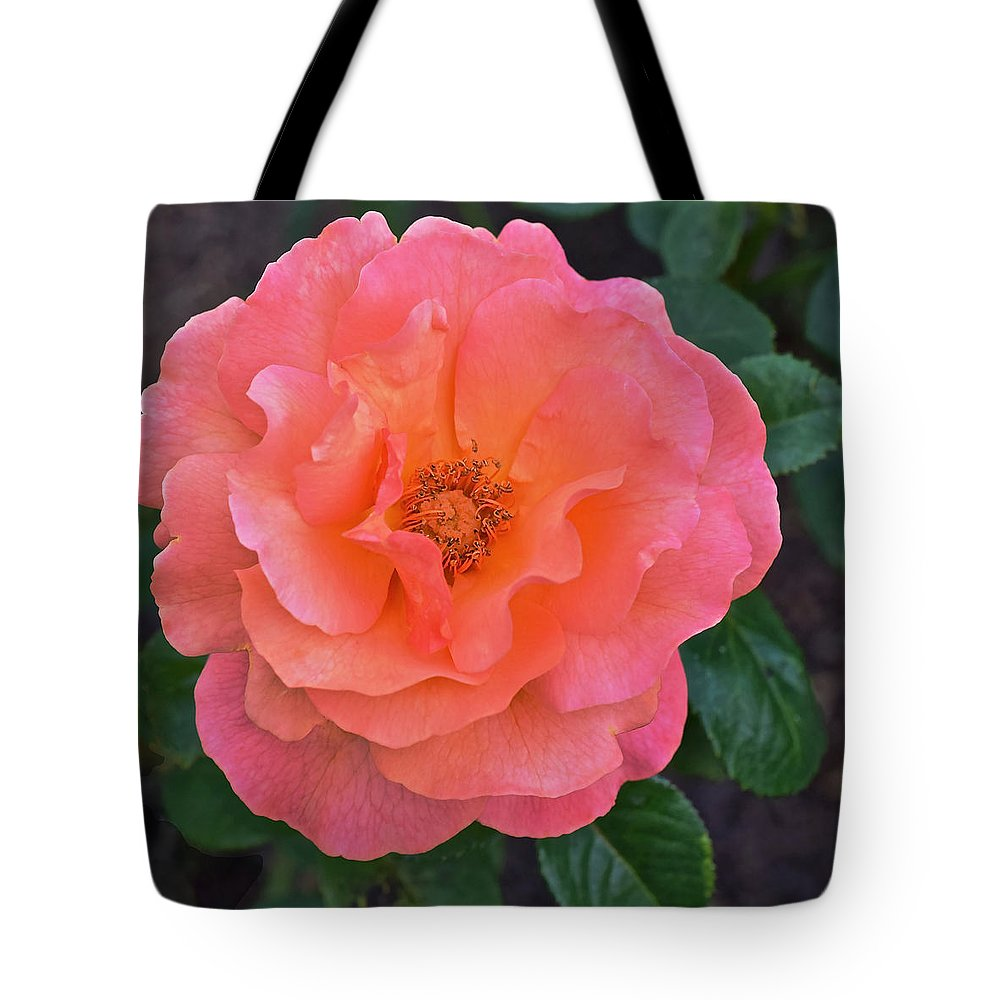Roses Tote Bag featuring the photograph Fall Gardens Full Bloom Harvest Rose by Janis Nussbaum Senungetuk