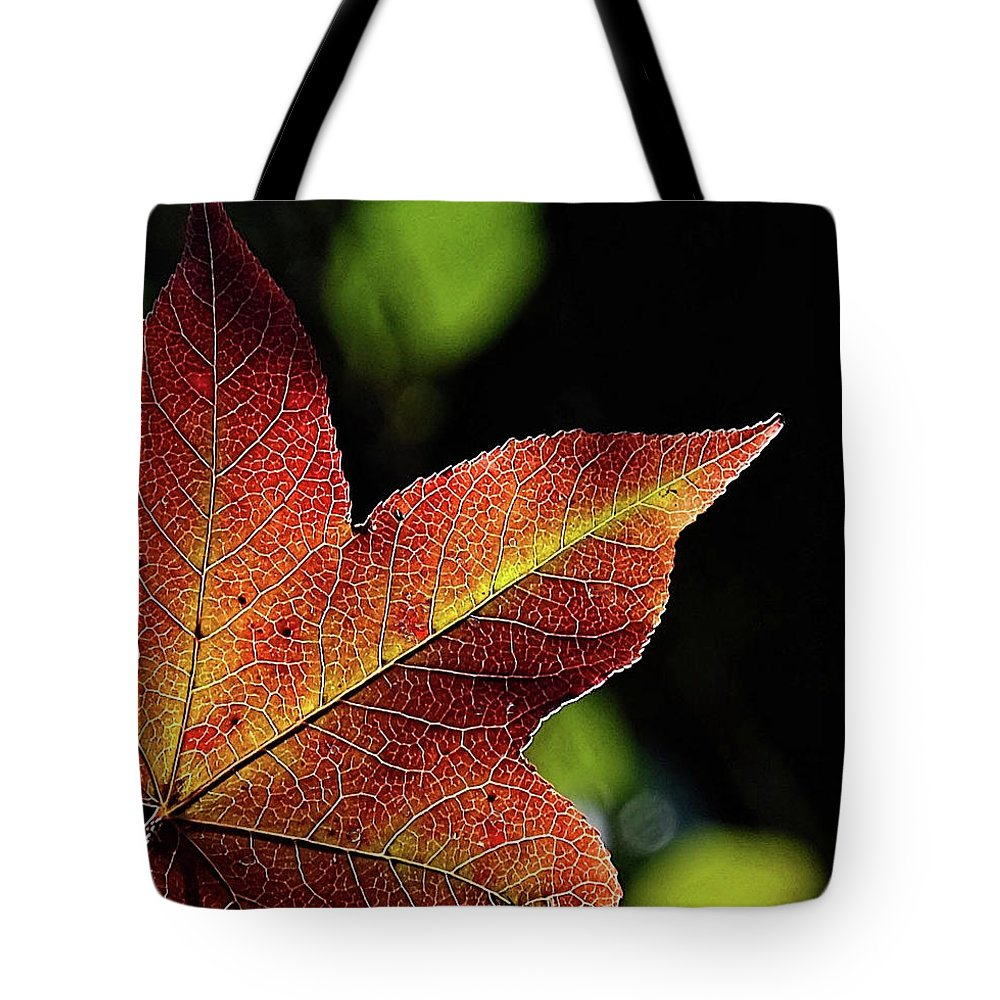 Fall Tote Bag featuring the photograph Fall Leaf by Ronda Ryan