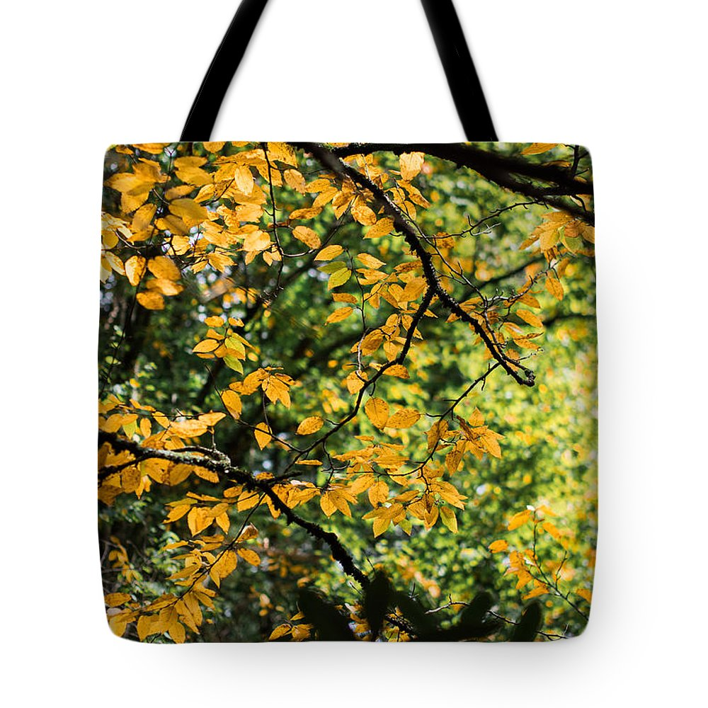 Fall Tote Bag featuring the photograph Fall Leaves In The Smokies by Douglas Garland