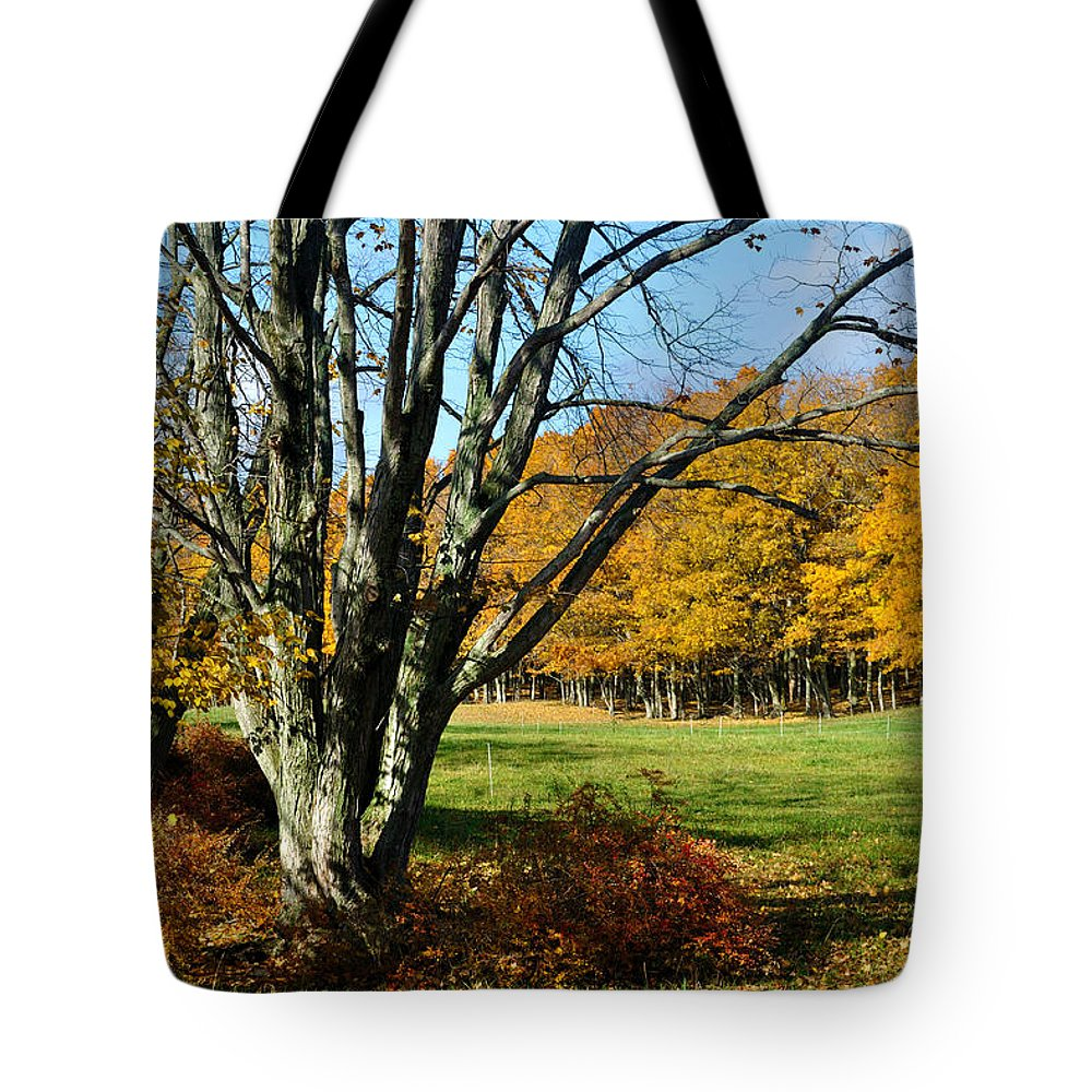 Trees Tote Bag featuring the photograph Fall Pasture by Tim Nyberg