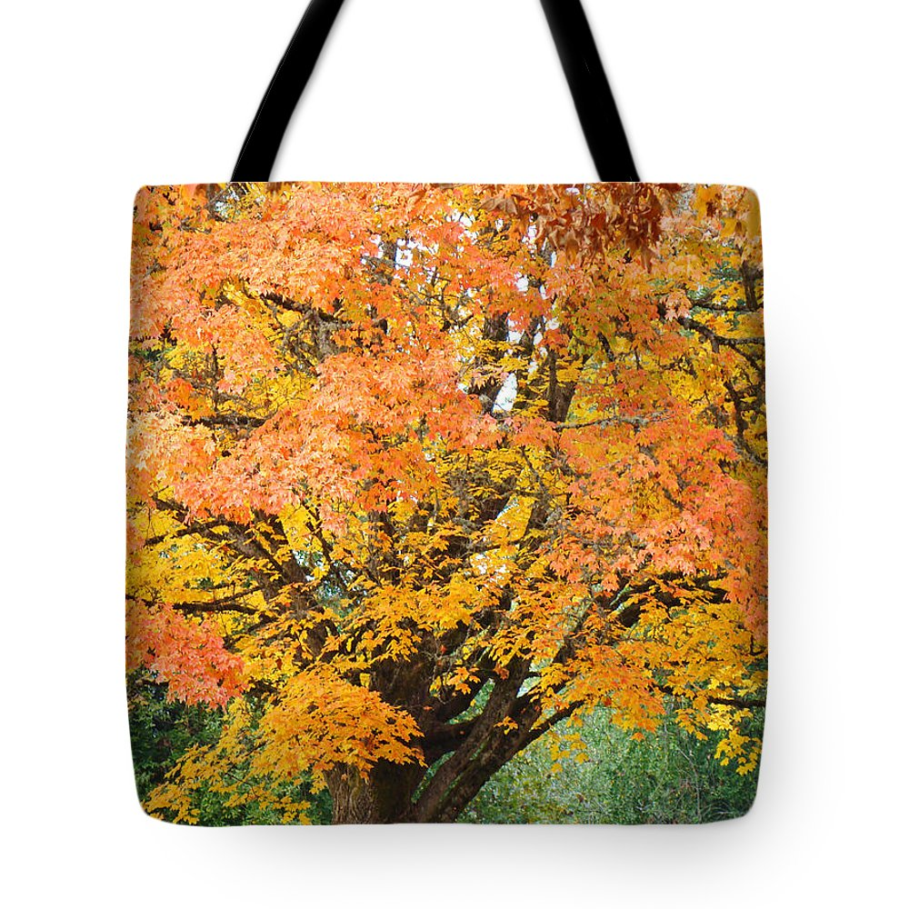 Autumn Tote Bag featuring the photograph Fall Tree Art Print Autumn Leaves by Baslee Troutman