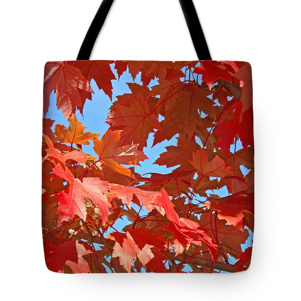 Autumn Tote Bag featuring the photograph Fall Tree Leaves Red Orange Autumn Leaves Blue Sky by Baslee Troutman