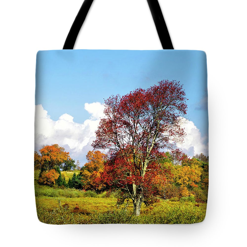 Fall Trees Tote Bag featuring the photograph Fall Trees In Country Field by Christina Rollo