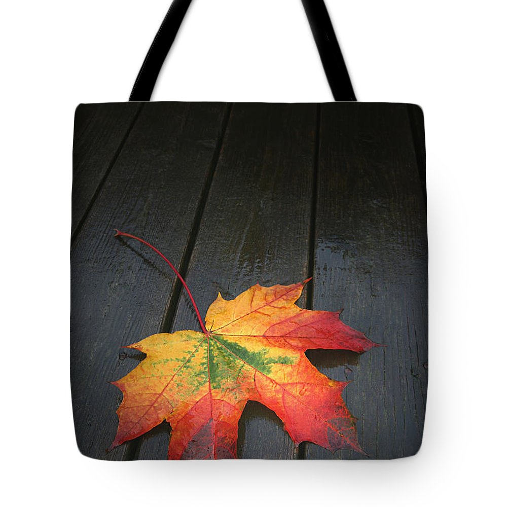 Leaf Autumn Fall Rain Color Tote Bag featuring the photograph Fall by Winston Rockwell