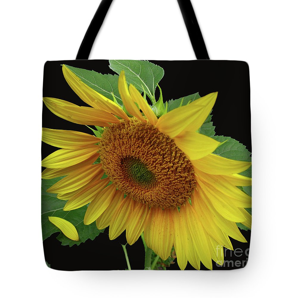 Sunflower Tote Bag featuring the photograph Fallen by Douglas Stucky