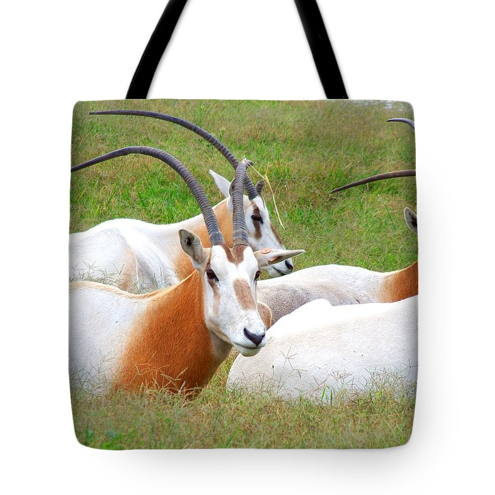 Antelope Tote Bag featuring the photograph Family Gathering by Jai Johnson