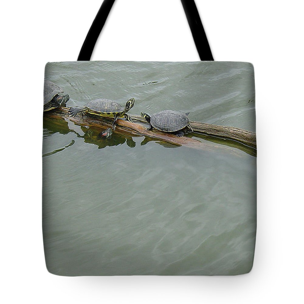 Turtle Tote Bag featuring the photograph Family Gathering by Suzanne Gaff