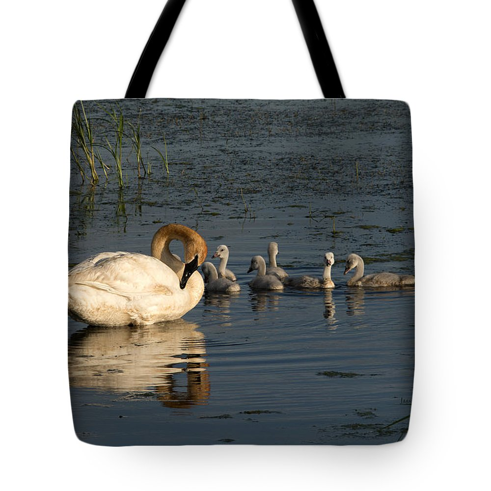 Swan Tote Bag featuring the photograph Family Outing by Jayne Gohr
