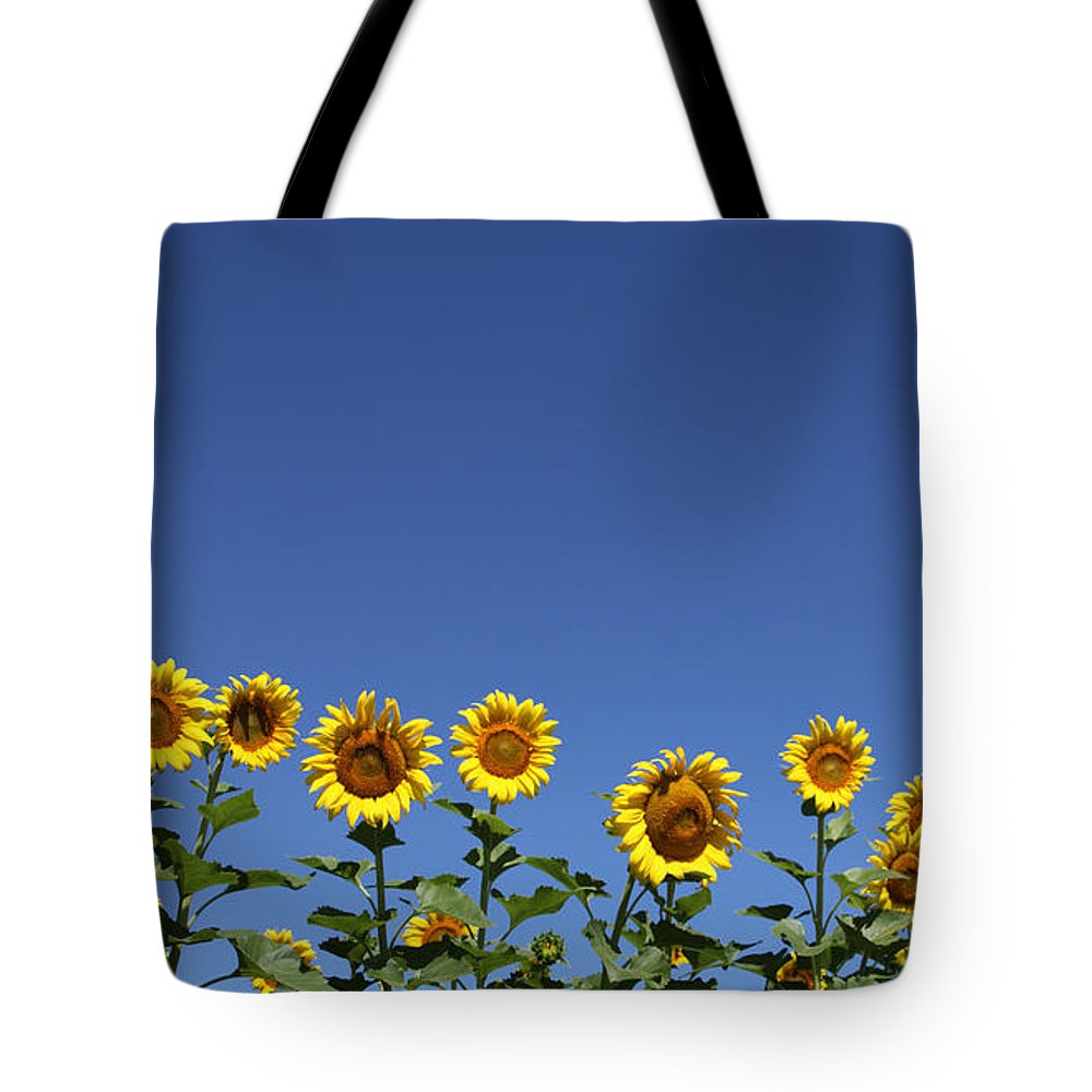 Sunflowers Tote Bag featuring the photograph Family time by Amanda Barcon