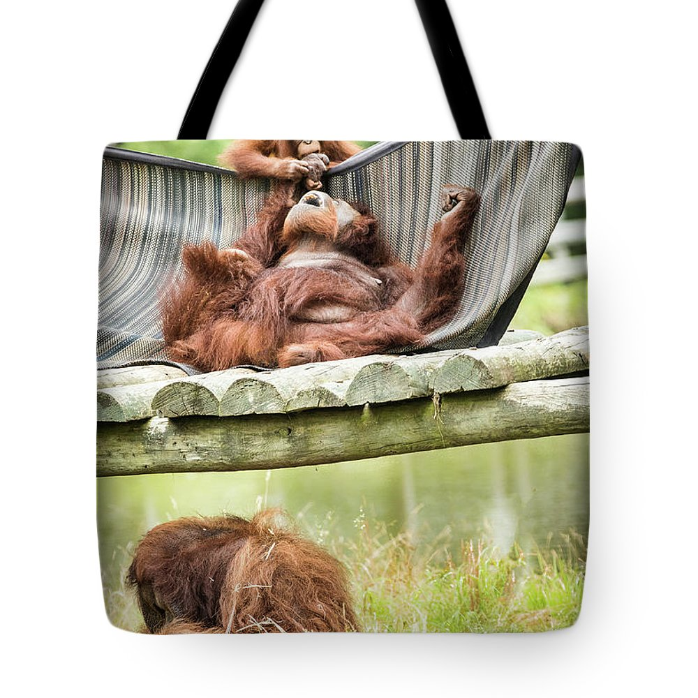 Orangutang Tote Bag featuring the photograph Family Time by Ed Tepper
