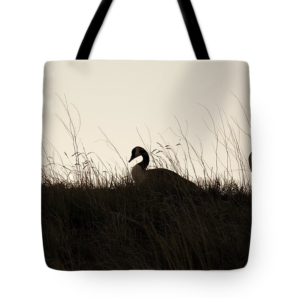 Family Tote Bag featuring the photograph Family Time by Marilyn Hunt