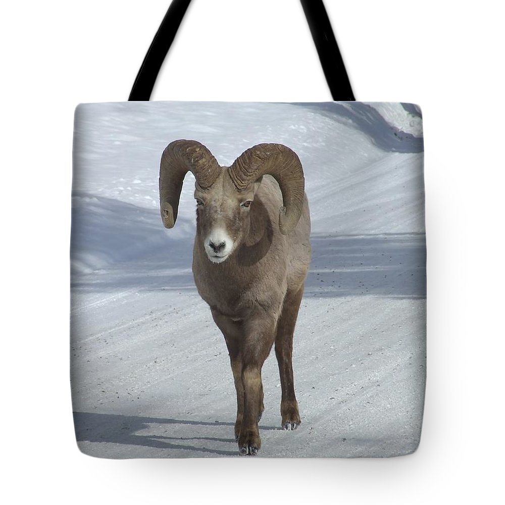 Bighorn Sheep Tote Bag featuring the photograph Farewell To The King by Tiffany Vest