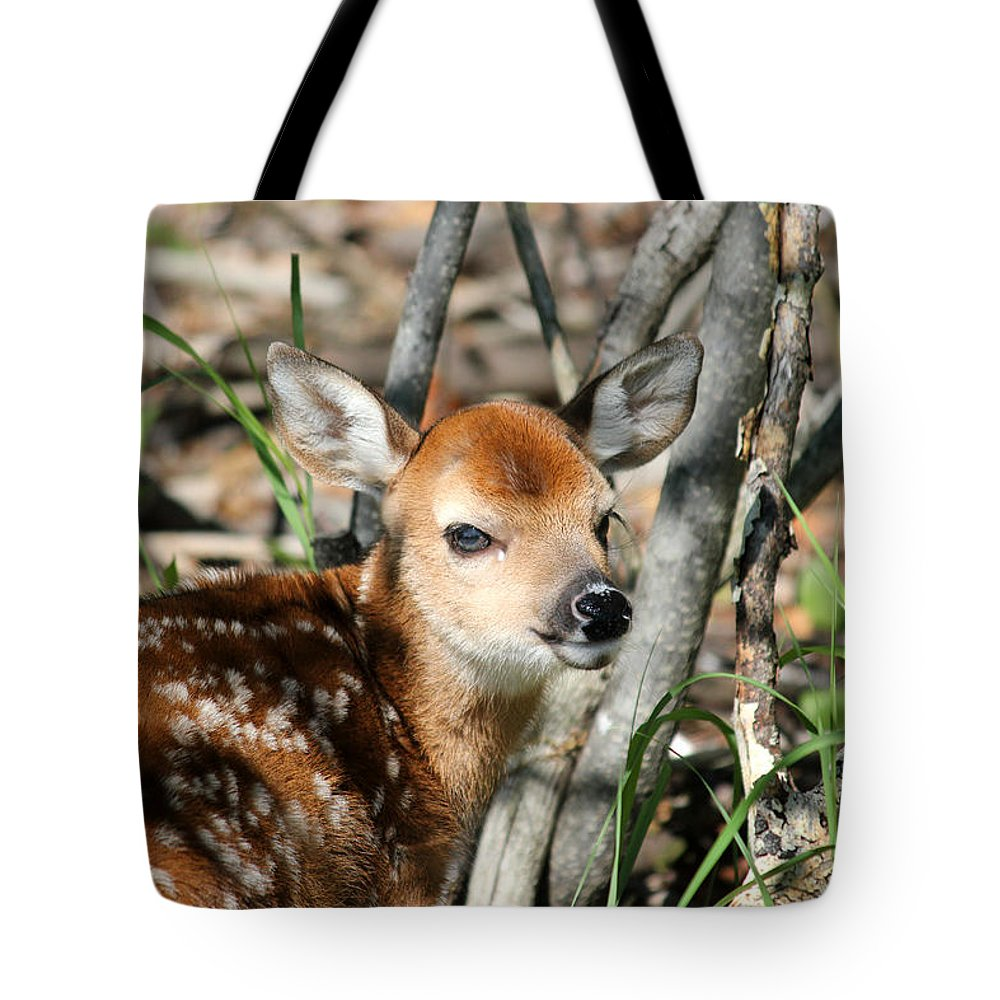 Cute Tote Bag featuring the photograph Fawn Face by Brook Burling