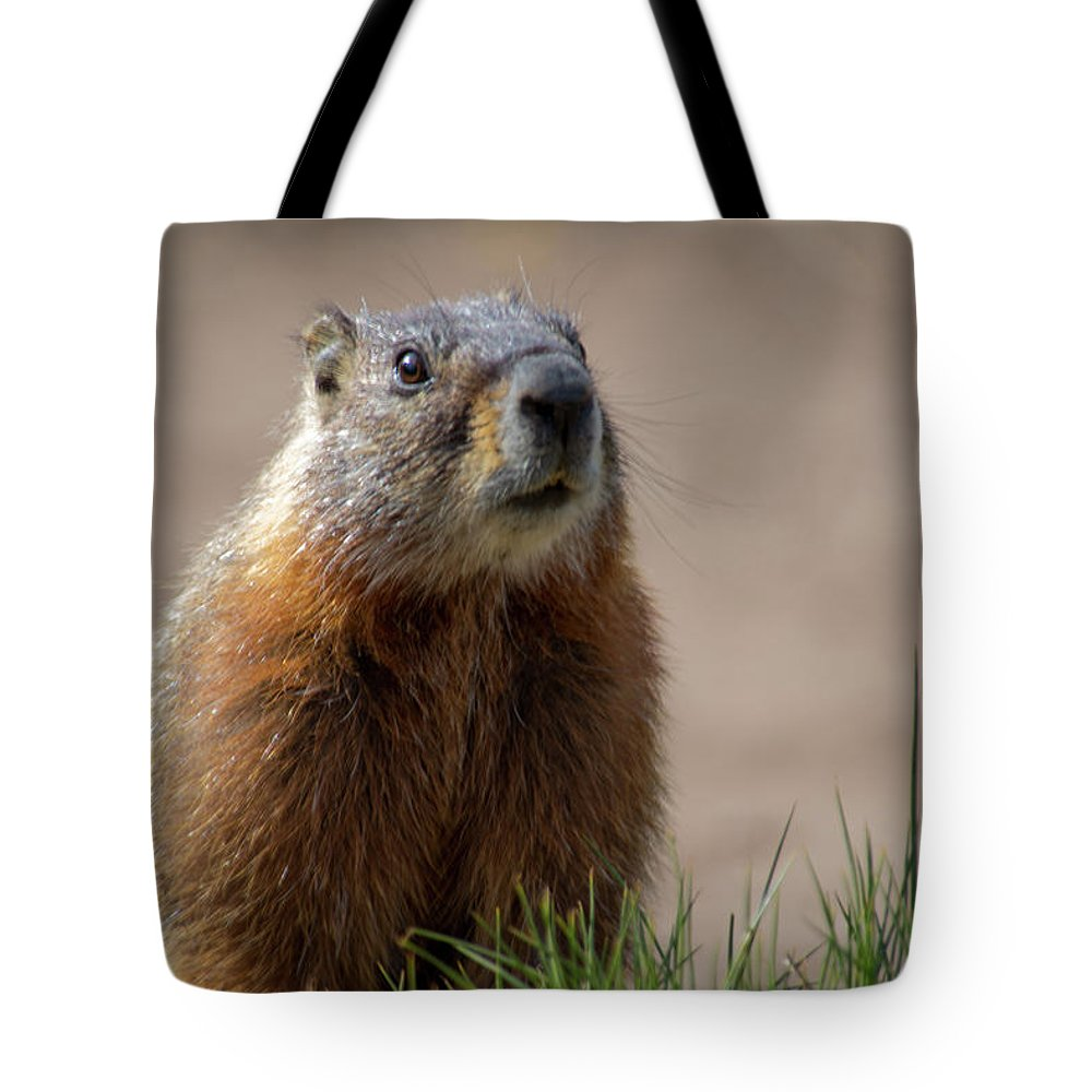 Wyoming Tote Bag featuring the photograph Fearless by Frank Madia