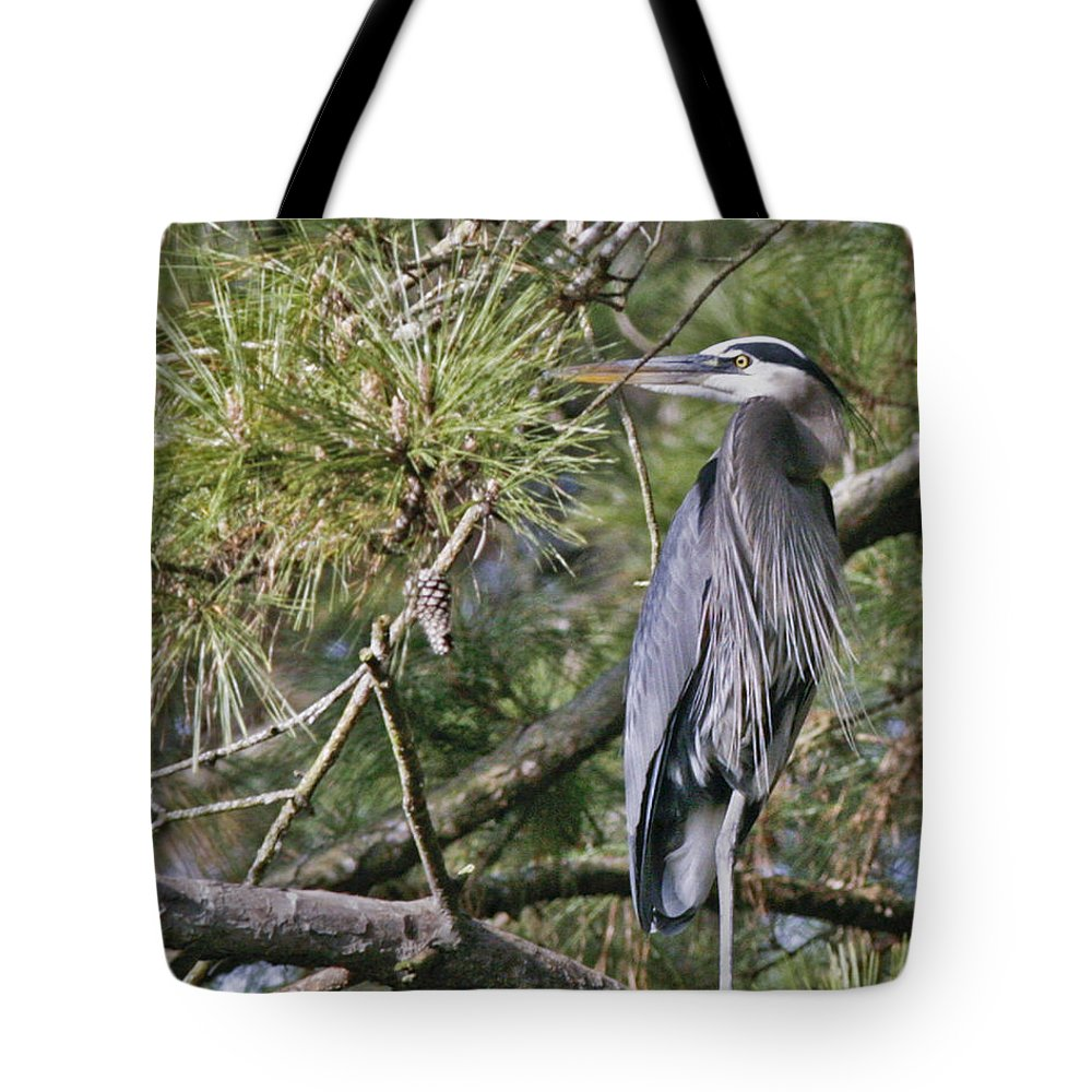 Bird Tote Bag featuring the photograph Feathers by Phill Doherty