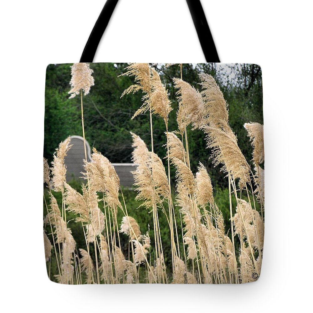 Weeds Tote Bag featuring the photograph Feathers by Susan Kinney