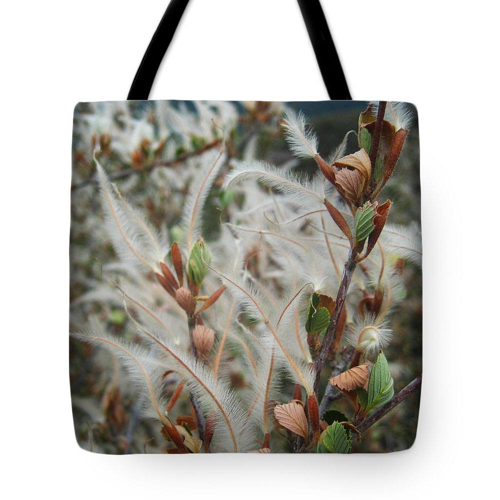 Botany Tote Bag featuring the photograph Feathery Styles Of Mountain Mahogany by Andrea Freeman