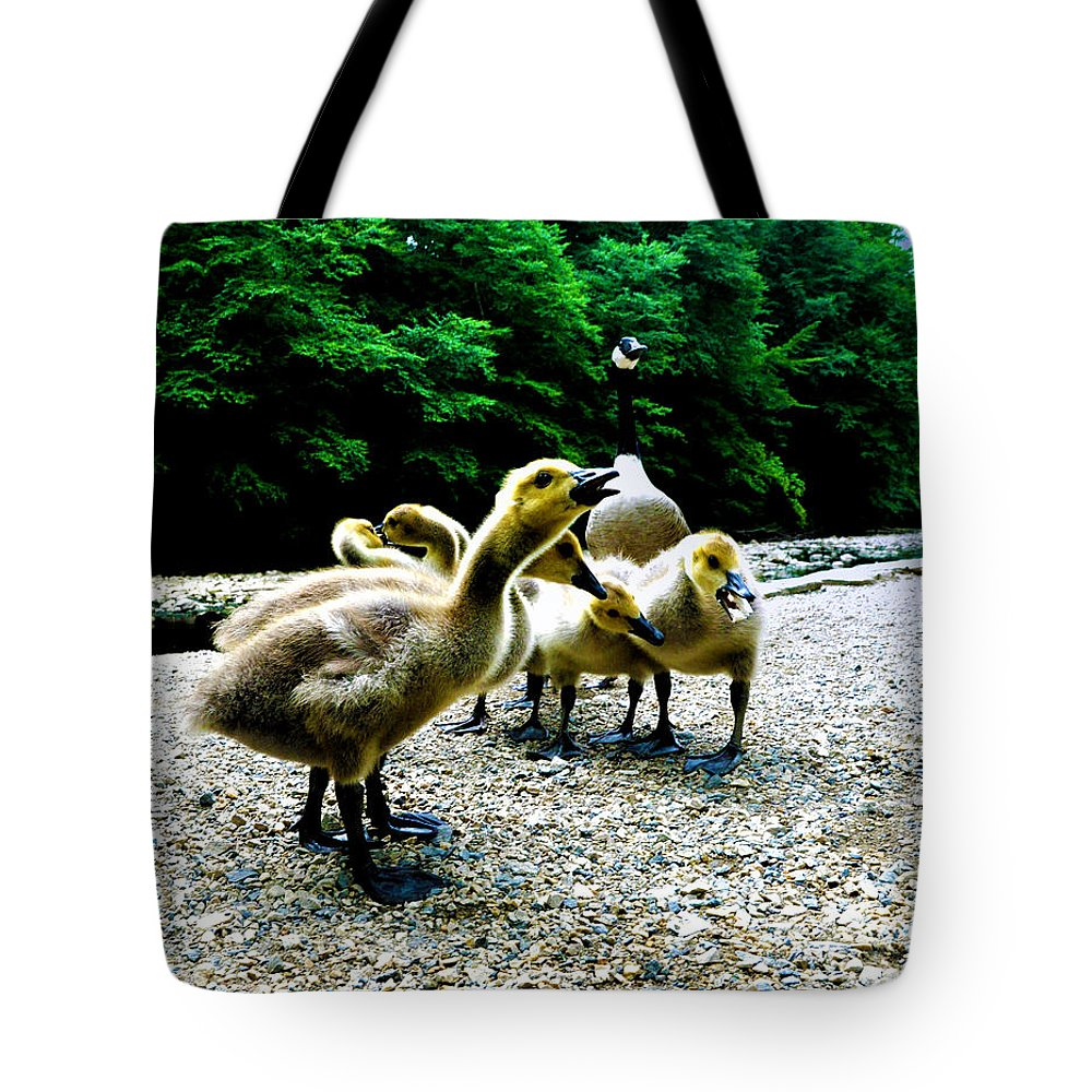Geese Tote Bag featuring the photograph Feed Me Seymore - Baby Geese by Bill Cannon