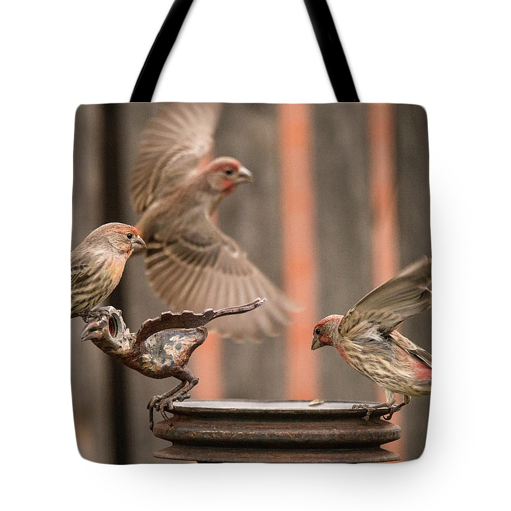 Male House Finches Tote Bag featuring the photograph Feeding Finches by Tim Kathka
