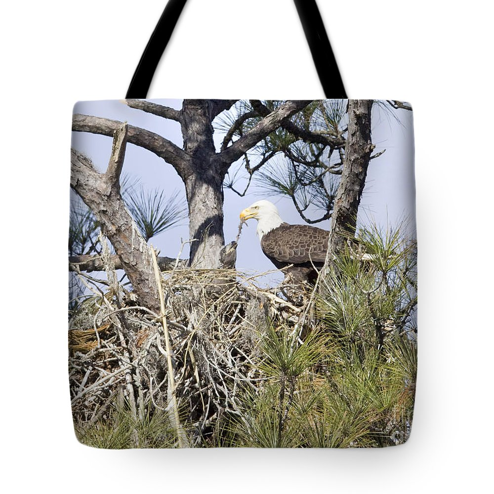 Eagles Tote Bag featuring the photograph Feeding Little One by Deborah Benoit