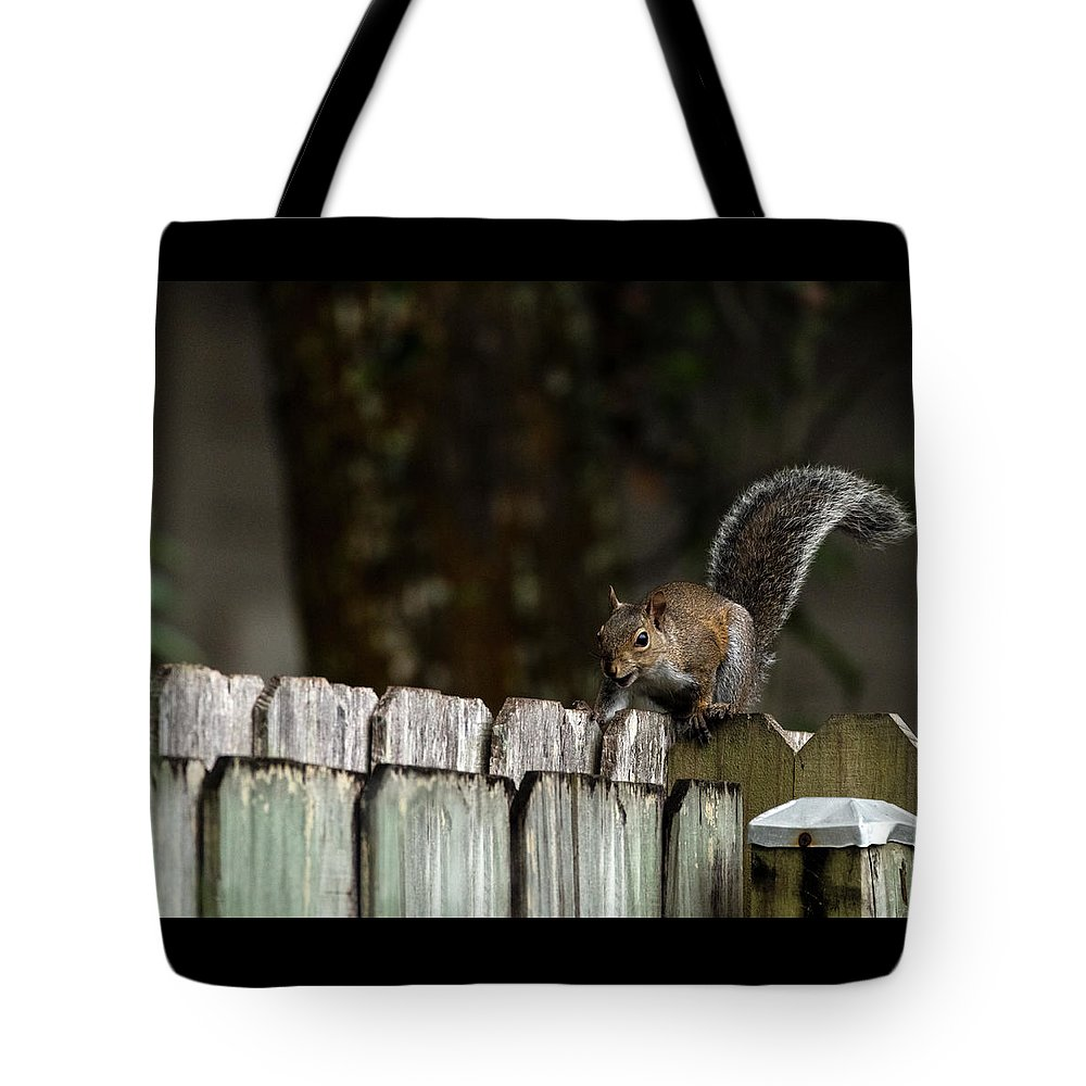 Squirrel Tote Bag featuring the photograph Feeling Squirrelly by Sharon Minish