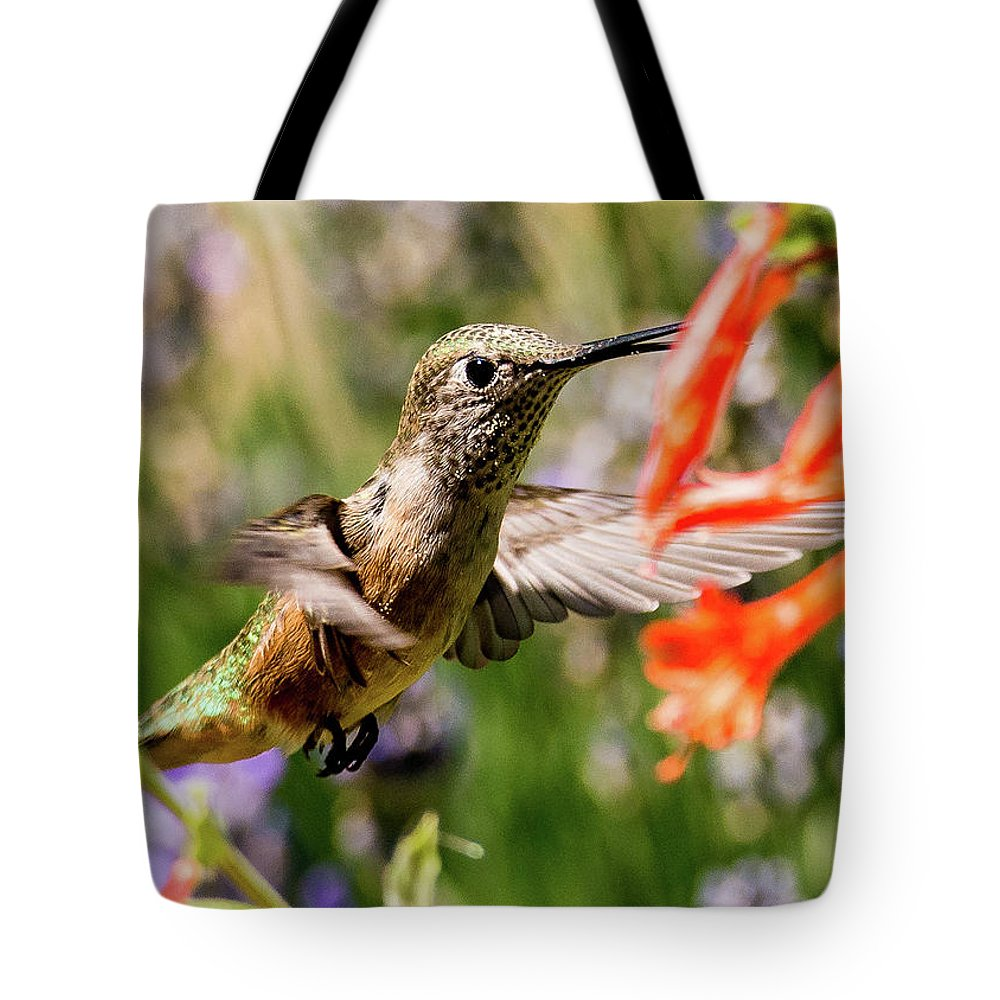 Broadtail Hummingbird Tote Bag featuring the photograph Female Broadtail Humingbird by Tim Kathka