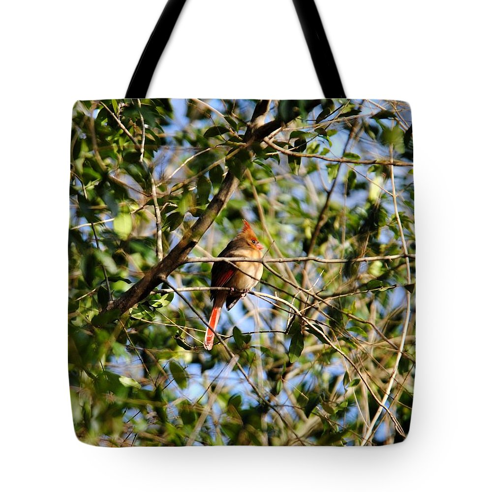 Cardinal Tote Bag featuring the photograph Female Cardinal IIi by Jai Johnson