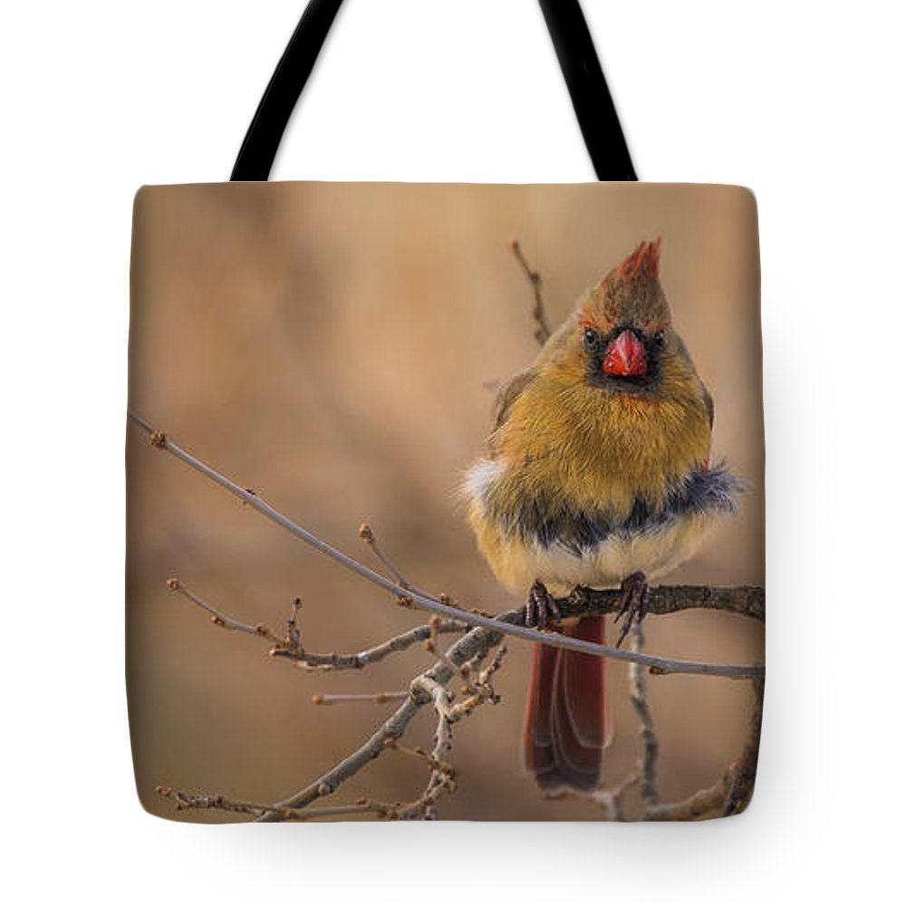 Aviary Tote Bag featuring the photograph Female Cardinal Portrait by Heather Hubbard
