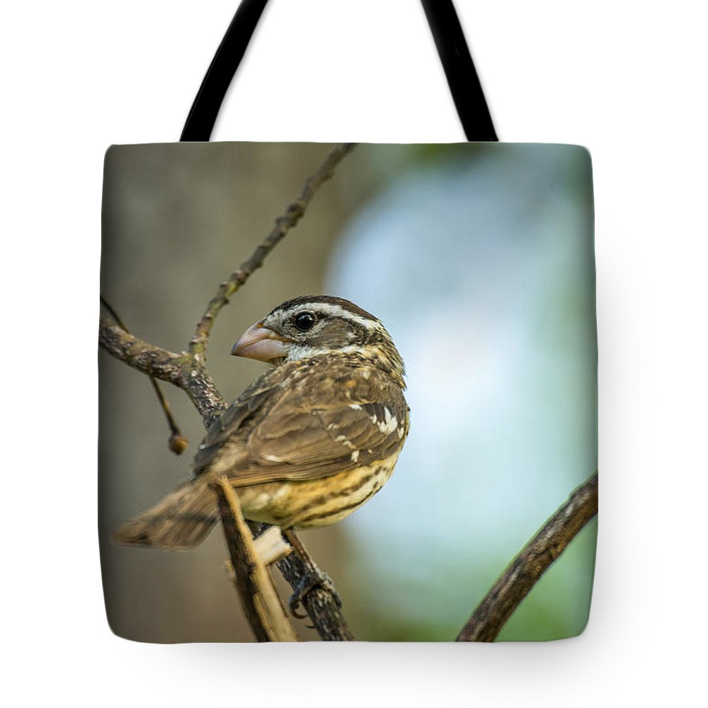 Female Tote Bag featuring the photograph Female Grossbeak Looking Back by Douglas Barnett