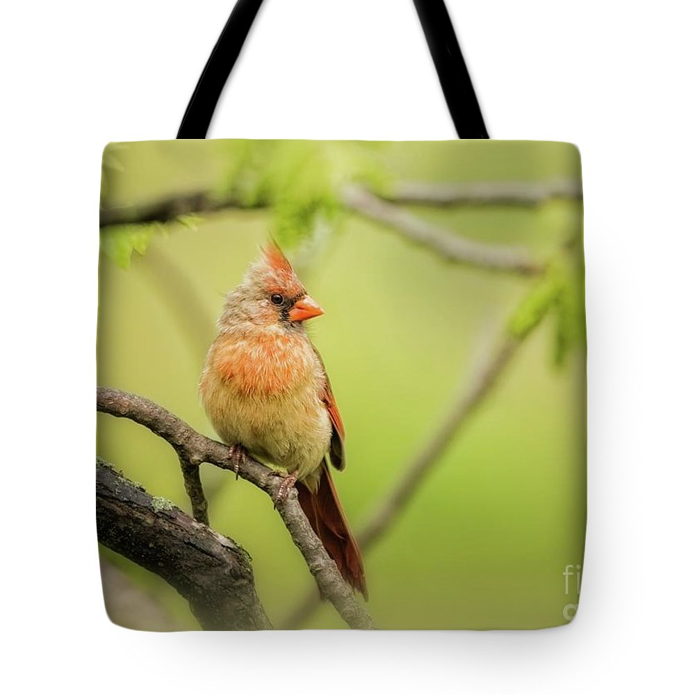 Aves Tote Bag featuring the photograph Female Northern by Heather Hubbard