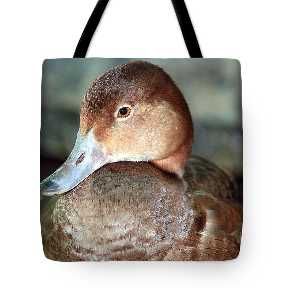Duck Tote Bag featuring the photograph Female Redhead Duck by Randy Matthews