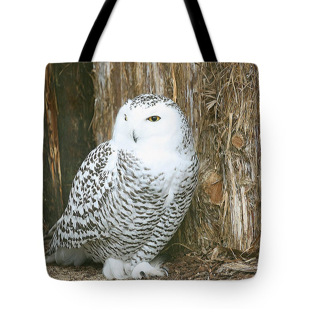 Owl Tote Bag featuring the photograph Female Snowy Owl by Gina Fitzhugh