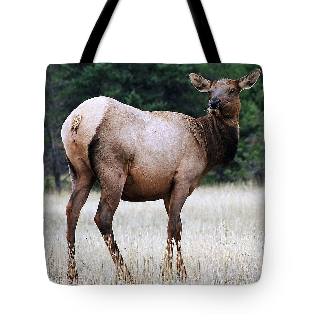Elk Tote Bag featuring the photograph Feme Elk by Tiffany Vest
