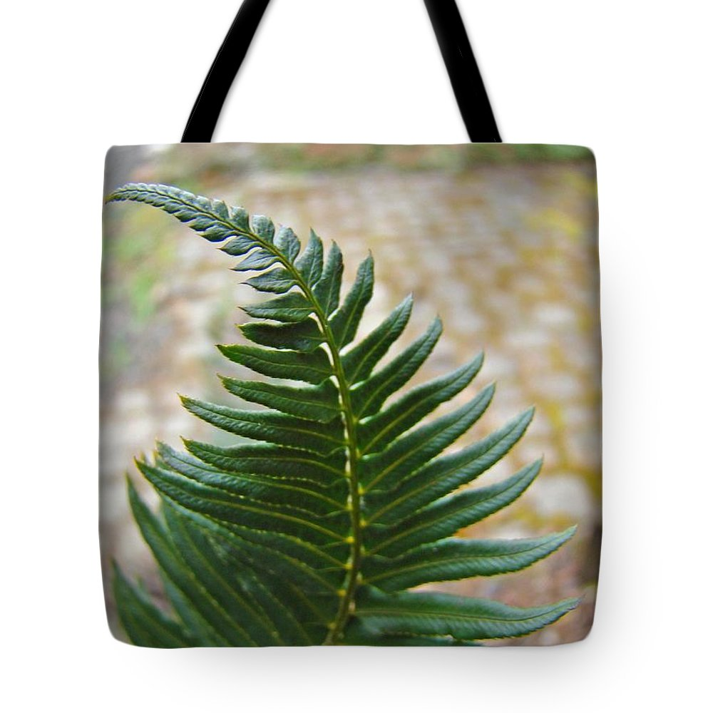 Fern Tote Bag featuring the photograph Fern Art Prints Green Garden Fern Branch Botanical Baslee Troutman by Baslee Troutman