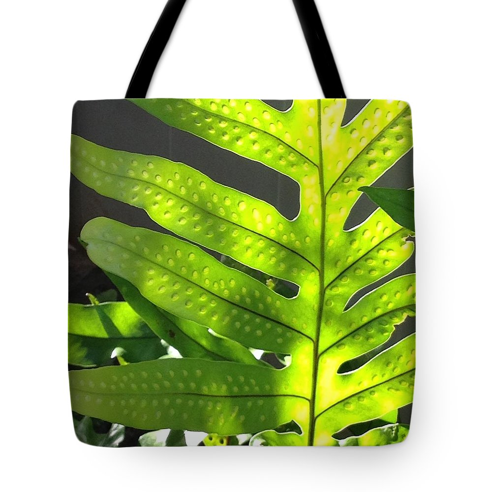 Ferns Tote Bag featuring the photograph Fern Delight by Pamela Bushnell