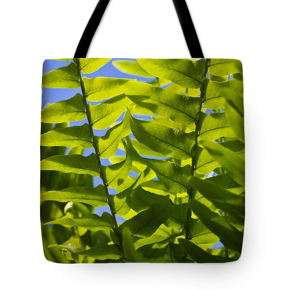 Spring Tote Bag featuring the photograph Fern Fronds Against Blue Sky by John Trax