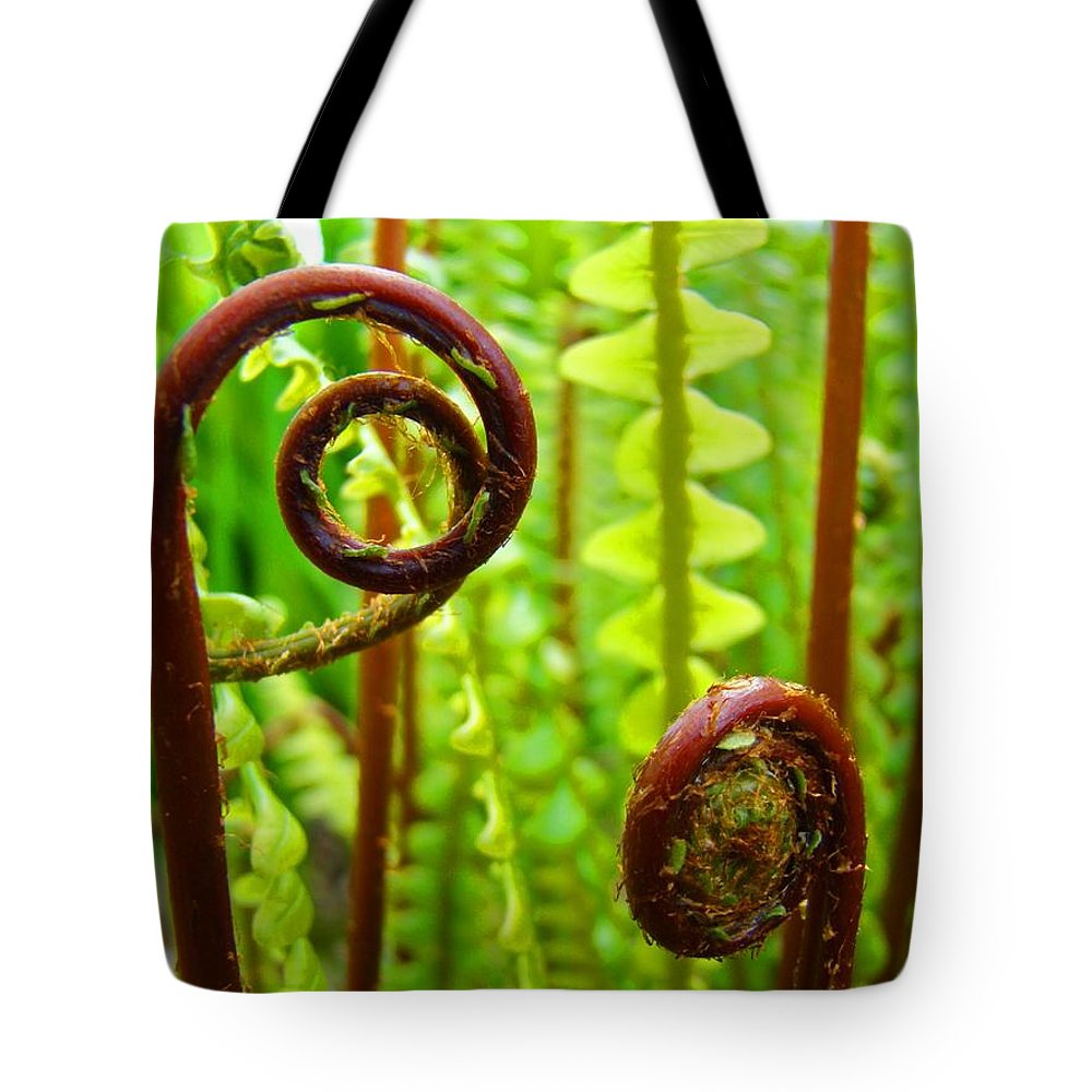 Fern Tote Bag featuring the photograph Fern Fronds Fine Art Photography Forest Ferns Green Baslee Troutman by Baslee Troutman