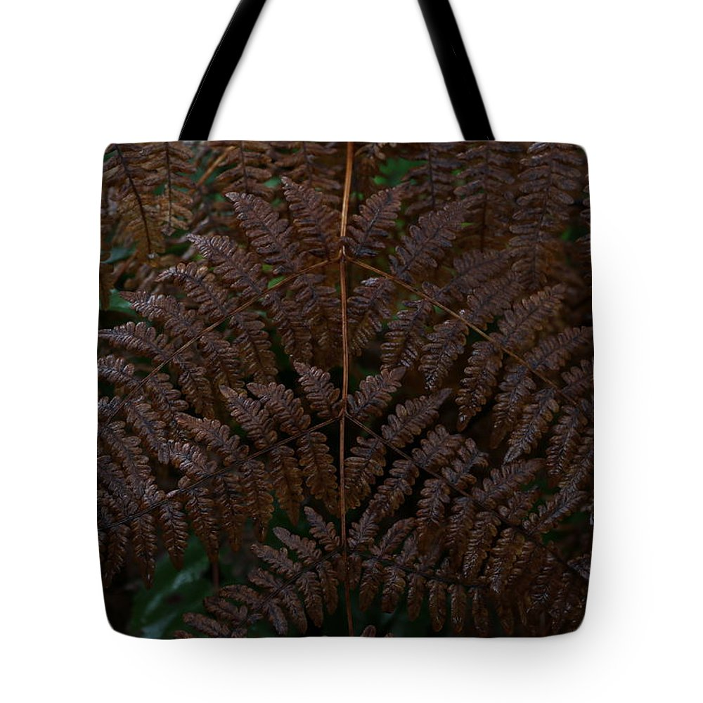 Fern Tote Bag featuring the photograph Fern Kaleidescope by Dani Keating