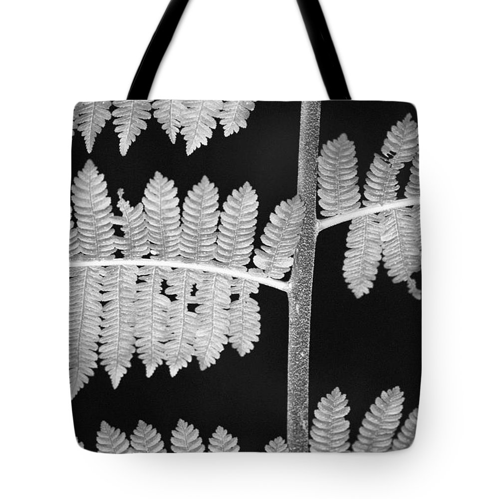 Fern Leaves Tote Bag featuring the photograph Fern Leaves 1 by Donna Corless