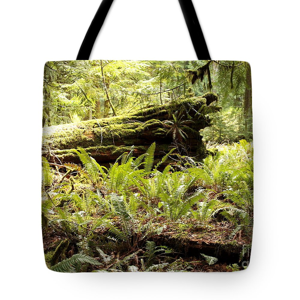 Ferns Tote Bag featuring the photograph Fern Valley by Carol Groenen