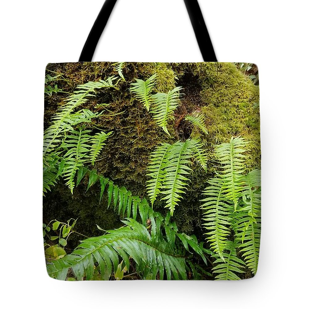 Plants Tote Bag featuring the photograph Ferns by Lindy Pollard