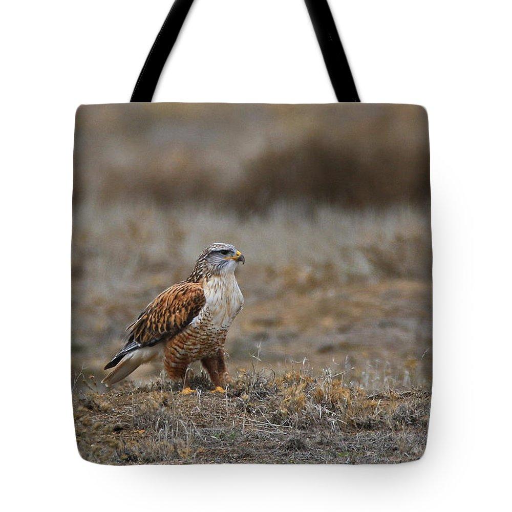 Ferruginous Tote Bag featuring the photograph Ferruginous Hawk In Field by Craig Corwin