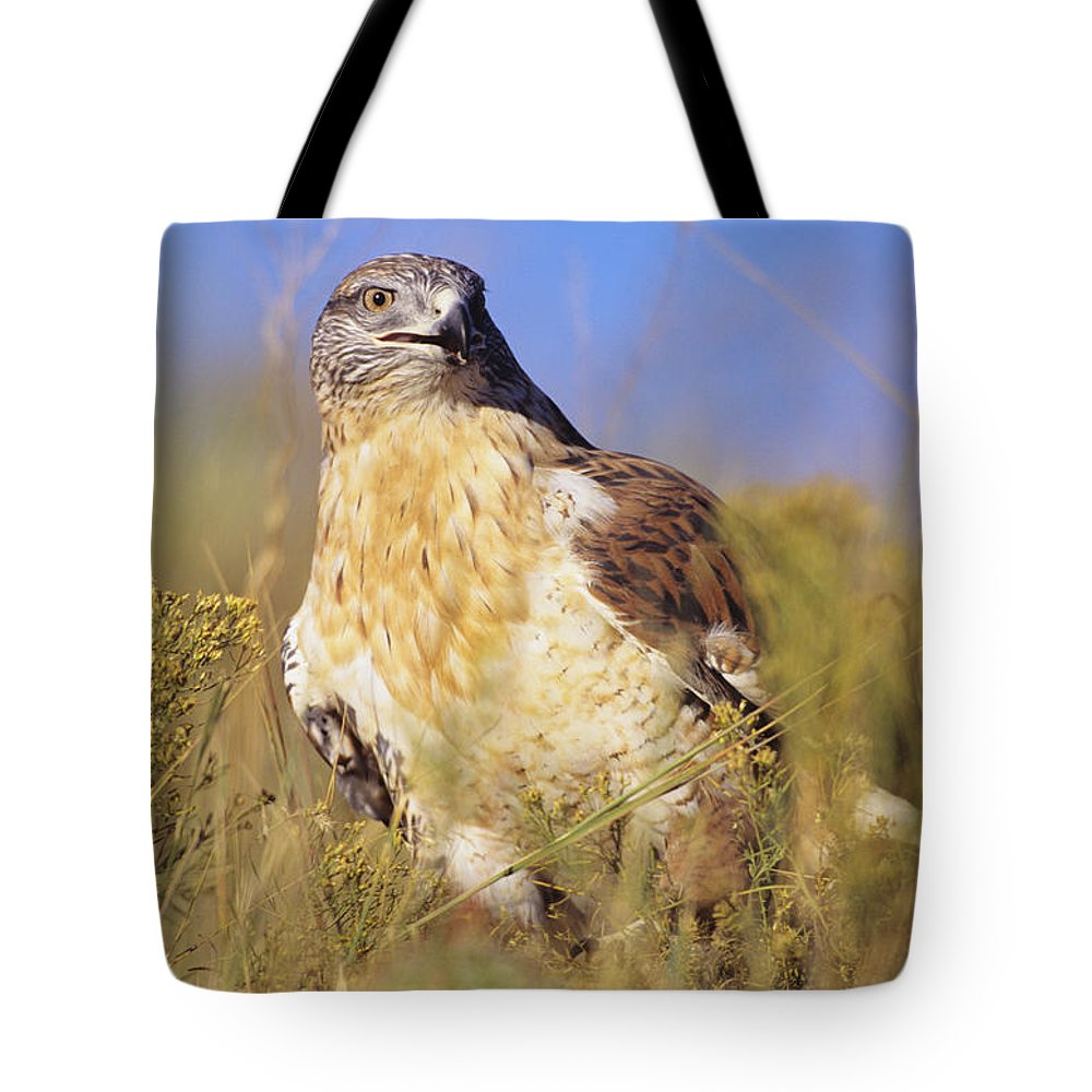 Animal Art Tote Bag featuring the photograph Feruginous Hawk by John Hyde - Printscapes
