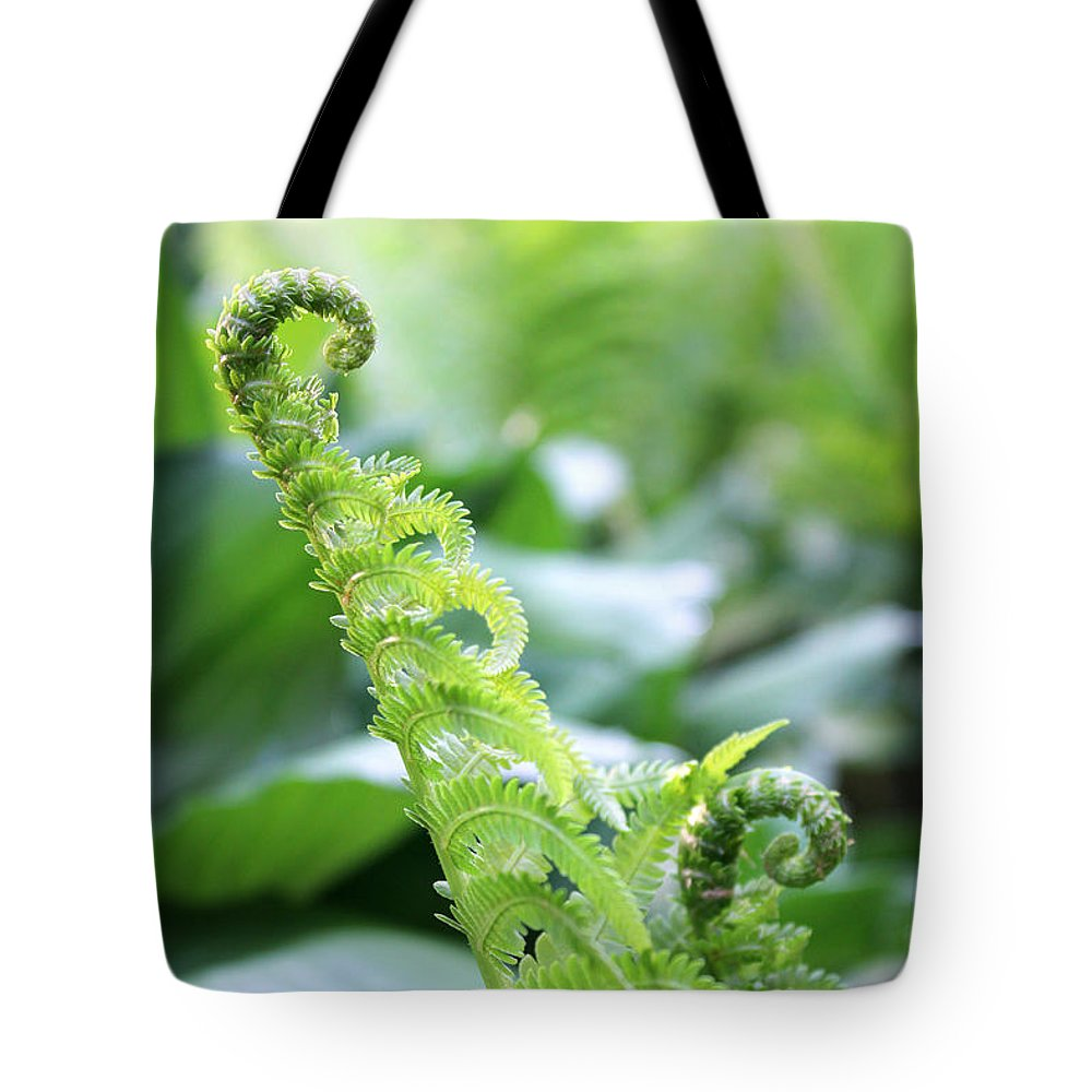 Fern Tote Bag featuring the photograph Fiddleback Fern Plant Unfurling In Springtime by Adam Long