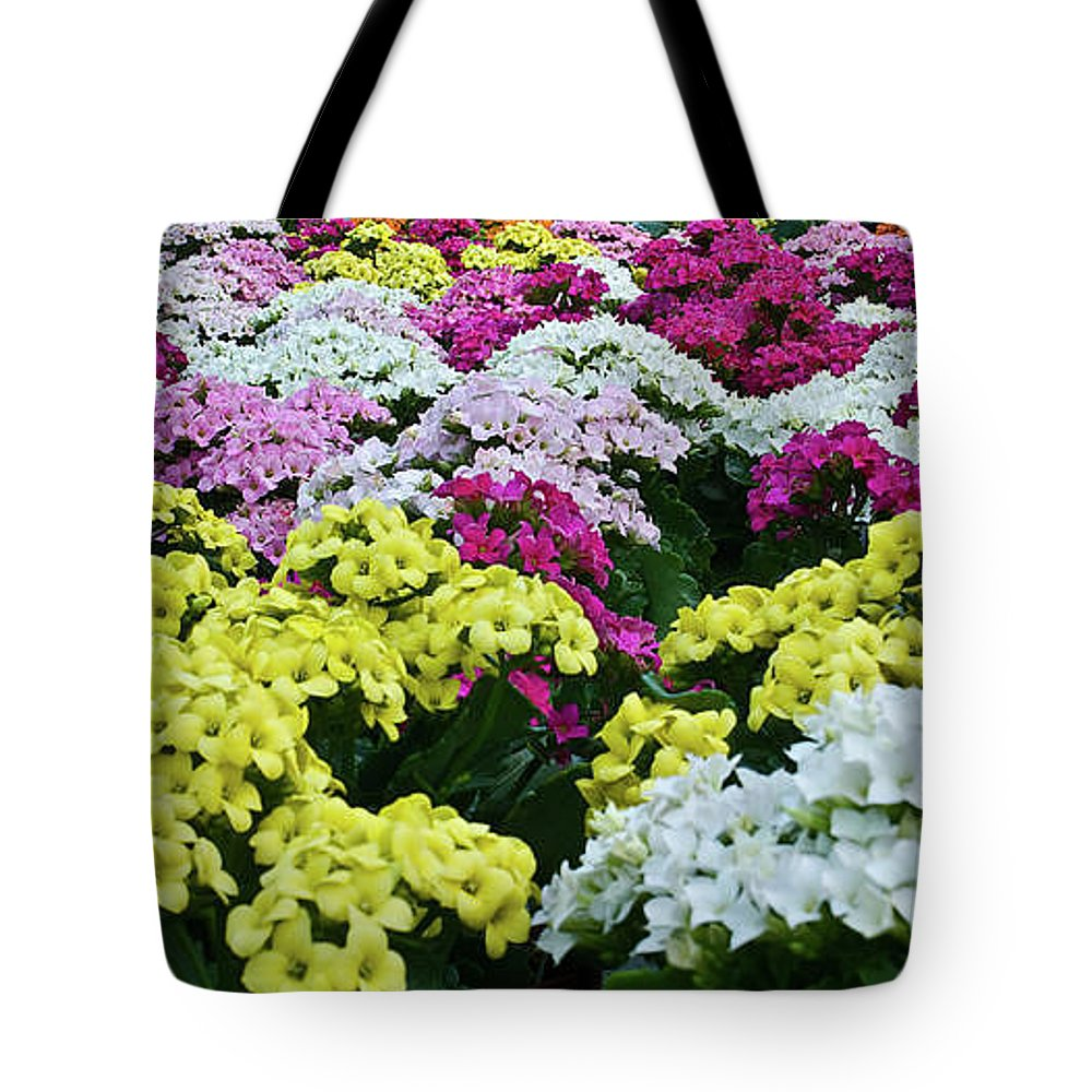 Kalanchoe Tote Bag featuring the photograph Field Of Kalanchoe by Douglas Barnett