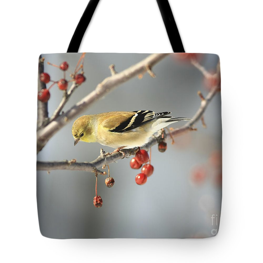 Finch Tote Bag featuring the photograph Finch Eyeing Seeds by Deborah Benoit